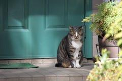 由门的猫 免版税图库摄影