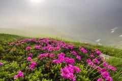 由阔气地开花在象草的山草甸密集的希腊字母的第17字的太阳的升 免版税库存照片