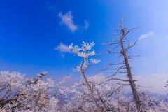 由雪的树盖子 免版税库存图片