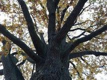 由静街的土气葡萄牙石头在静街上的StorkowBeautiful老树在施托尔科市 免版税库存照片
