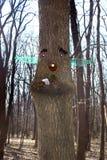 由面孔的Ade在树 免版税库存图片