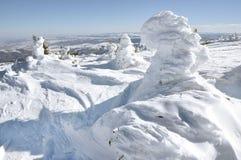 由风的积雪的树在山 图库摄影