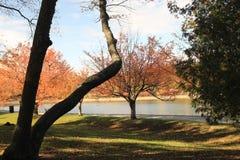 由水库的秋天树 免版税图库摄影