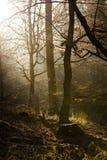 由黎明早期的光 库存图片