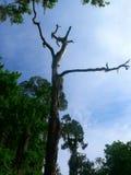 由锻炼足迹的一棵死的树在瓦尔登湖湖 库存图片