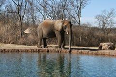 由水1的大象 免版税库存图片
