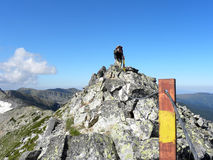 由绳索的少妇在陡峭的石山峰 免版税图库摄影