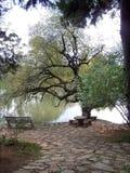 由水的树 库存图片