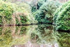由水的灌木 免版税图库摄影