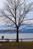 由水的结构树 库存照片
