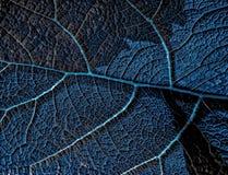 由细胞的叶子细胞 免版税图库摄影
