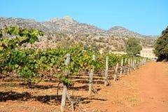 由Agia Triada修道院,克利特的葡萄树 免版税库存照片