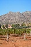 由Agia Triada修道院,克利特的葡萄树 免版税图库摄影