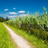 由Apine湖边的循环的路径在夏天 库存照片