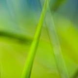 由Blured做的充满活力的绿色背景芦苇Laves 免版税库存图片