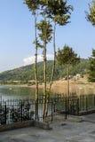 由bovansko湖的少量树 库存照片