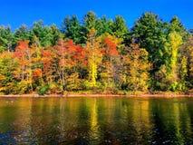 由housatonic河的树在秋天 免版税库存图片