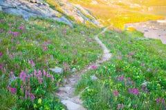 由Ice湖的一串足迹科罗拉多圣胡安山的  免版税库存图片