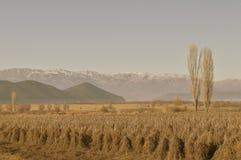 由ioanna papanikolaou的冬天领域 库存照片