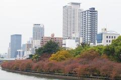 由Okawa河的大阪,日本- 11月13,2015公园大阪城堡的在红色秋天与大厦在企业区域大阪 库存照片
