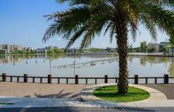 由planked道路的铁木树沿湖边在晴朗的夏天城市 免版税库存图片