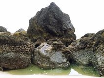 甲壳动物的被盖的岩石 库存图片
