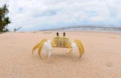 甲壳动物-玛丽亚法里尼亚 库存照片