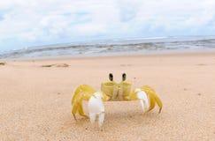 甲壳动物-玛丽亚法里尼亚 免版税库存照片