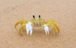 甲壳动物-玛丽亚法里尼亚 免版税库存图片