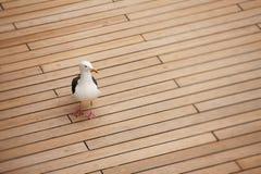 甲板海鸥 免版税库存图片