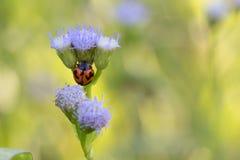 甲虫一点 库存照片