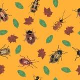 甲虫和叶子在橙色背景 免版税库存照片