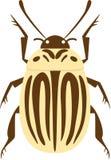 甲虫土豆 库存图片