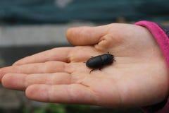 甲虫在孩子的手上 免版税库存照片