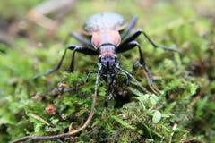 甲虫妖怪 图库摄影