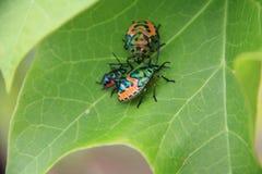 甲虫家庭  免版税库存照片