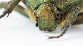 甲虫极端特写镜头  影视素材