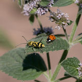 甲虫生活 免版税库存图片