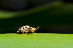 甲虫绿色叶子桔子 库存照片