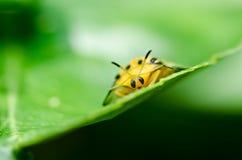 甲虫绿色本质桔子 免版税库存照片