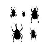 甲虫臭虫被设置的剪影 向量例证