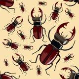 甲虫雄鹿 无缝的模式 现实昆虫 向量例证