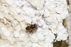 甲虫,蜘蛛,昆虫 免版税图库摄影