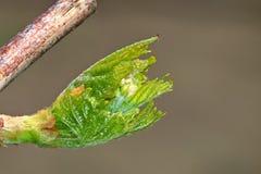 甲虫,蜘蛛,昆虫 库存图片