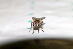 甲虫,蜘蛛,昆虫 免版税库存图片
