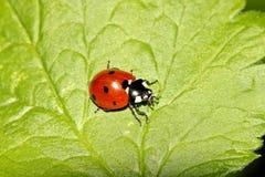 甲虫,蜘蛛,昆虫 免版税库存照片
