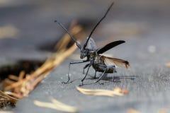 甲虫离开 免版税库存照片