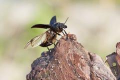 甲虫离开 库存图片