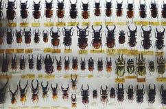 甲虫-臭虫样式 图库摄影