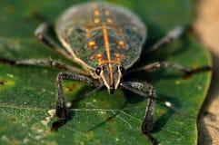 甲虫 免版税图库摄影